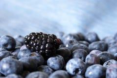 Blackberry on Blueberries Stock Photography