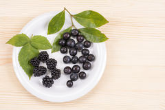 Blackberry and blueberry fruit Stock Photography