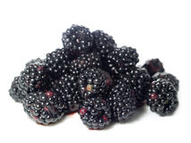 Blackberry or bramble fruit. Blackberries or brambles fruit isolated on white background Stock Photography