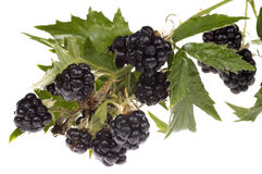 Blackberry brunch Stock Photography