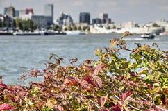 Blackberry buske, flod och horisont arkivfoto