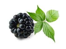Blackberry com ramo verde Imagem de Stock Royalty Free