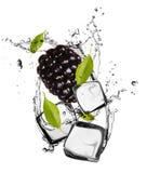 Frutta del ghiaccio Fotografia Stock Libera da Diritti