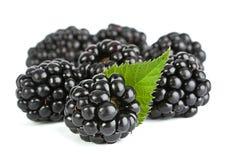 Blackberry con la hoja imagen de archivo libre de regalías
