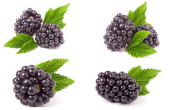 Blackberry con las hojas aisladas en el fondo blanco Sistema o colección Fotografía de archivo