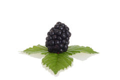 Blackberry con le foglie Immagine Stock Libera da Diritti