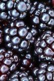 Blackberry detail Royalty Free Stock Photos