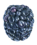 Blackberry. Drawing with colored pencils on white background royalty free stock images