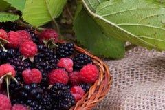 Blackberry e lampone con le foglie in un canestro Fotografia Stock
