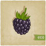 Blackberry eco background Stock Photos