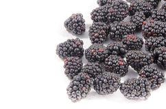 Look at that I found some blackberry`s. The blackberry is an edible fruit produced by many species in the genus Rubus in the family Rosaceae, hybrids among these royalty free stock photo