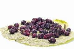 The blackberry fruit. The blackberry is an edible fruit produced by many species in the Rubus genus in the Rosaceae family, hybrids among these species within Royalty Free Stock Photos