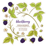 Blackberry elements vector set. On white background Stock Photography