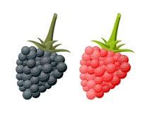 Blackberry en de framboos isoleerden wit stock illustratie