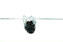 Blackberry falling into water with a splash. Black Blackberry falling into water with a splash royalty free stock photos