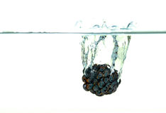 Blackberry falling into water with a splash. Black Blackberry falling into water with a splash stock image