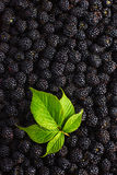 Blackberry food background. Fresh berries and green leaf. Top view Royalty Free Stock Photo