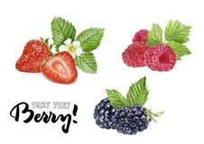 Blackberry, frambuesa, ejemplo del drenaje de la mano del ejemplo de la acuarela de la fresa ilustración del vector
