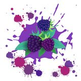 Blackberry-Frucht-Logo Watercolor Splash Design Fresh-Naturkost Stockbild