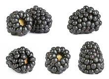 Blackberry-fruit Royalty-vrije Stock Afbeeldingen