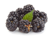 Blackberry-fruit royalty-vrije stock afbeelding