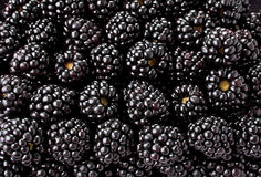 Blackberry fruit background Stock Images