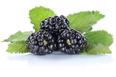 Blackberry fruit blackberries berry berries fruits with leaves i Royalty Free Stock Images