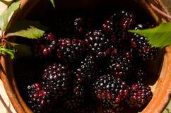 Blackberry fruit. Close up Stock Photo