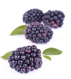 Blackberry fruit closeup. Berry blackberry closeup on white background Royalty Free Stock Images