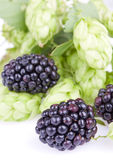 Blackberry fruit closeup. Berry blackberry close-up on the background of hop cones Royalty Free Stock Photos
