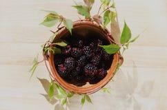 Blackberry fruit. Fresh blackberry fruits Royalty Free Stock Photos