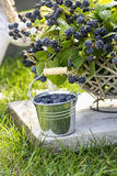 Blackberry fruit growing on branch Royalty Free Stock Photo