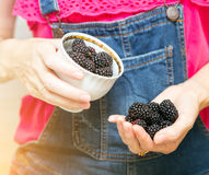 Blackberry fruit Royalty Free Stock Photos