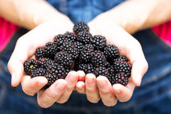 Blackberry fruit Stock Image