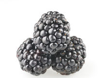 Blackberry fruit objects isolated Royalty Free Stock Photos