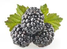 Blackberry fruit objects isolated Stock Image