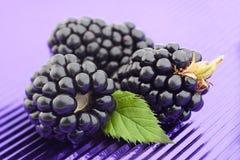 Blackberry-fruit op purpere folie Stock Foto