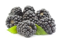 Blackberry-fruit op wit stock foto's