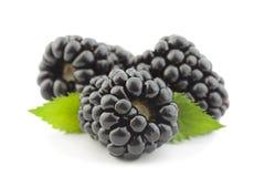 Blackberry-fruit op wit stock foto