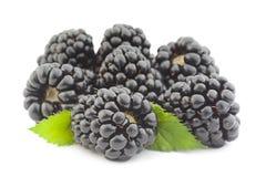 Blackberry fruit on white stock photos