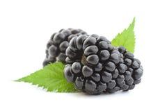 Blackberry fruit on white royalty free stock photography