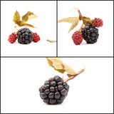 Blackberry fruits Royalty Free Stock Images