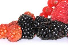 Blackberry frukter Royaltyfri Fotografi