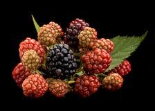 Blackberry fruktgrupp på svart Arkivfoto