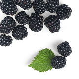 Blackberry with green leaf isolated stock images