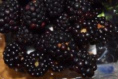Blackberry grupp Arkivfoto