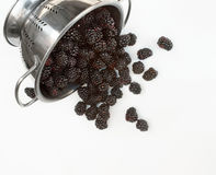 Blackberry Harvest Royalty Free Stock Photo