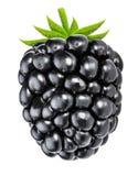 Blackberry a isolé sur le fond blanc avec le chemin de coupure Photographie stock