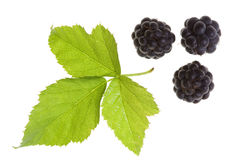 Blackberry  isolated Stock Photography