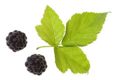 Blackberry on isolated Royalty Free Stock Image